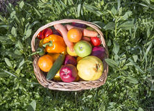 Fruit and vegetable basket. Healthy and organic Fruit and vegetable in the Basket  in orchard in a sunny day Royalty Free Stock Photos