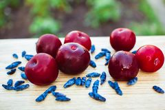 Wet plum are on the Board Royalty Free Stock Photos