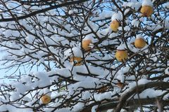Fruit in winter royalty free stock photos