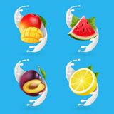 Fruit yogurt set. Mango, lemon, watermelon, plum and milk splash Realistic vector icon.  stock illustration