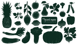 Fruita di vettore e siluette delle verdure Illustrazioni d'annata Oggetti disegnati a mano della natura Immagini Stock
