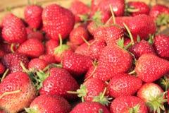 Fruitaardbei Stock Foto