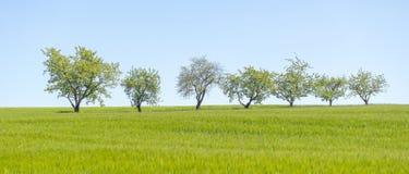 Fruitbomen op een rij stock fotografie