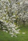 Fruitbomen; Sady obraz royalty free
