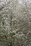 Fruitbomen; Sady zdjęcia stock