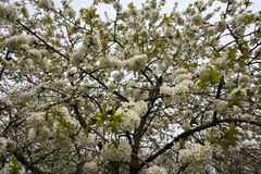 Fruitbomen; Sady fotografia stock