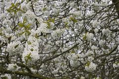 Fruitbomen; Sady zdjęcie stock