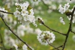 Fruitbomen; Sady obraz stock
