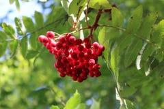 Fruitboom Royalty-vrije Stock Fotografie