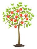 Fruitboom met appelen Illustratie voor landbouwboekjes, vliegerstuin royalty-vrije illustratie