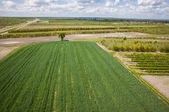 Fruitboomgaard, Poolse boomgaarden, luchtfoto Royalty-vrije Stock Foto
