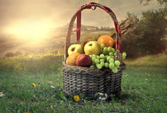 Fruitbox 免版税库存照片