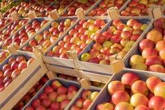 Fruitbox bij een voedselmarkt met kratten van appelen royalty-vrije stock afbeeldingen