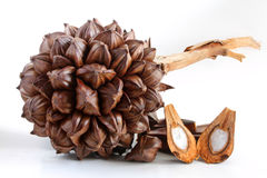 fruitcan尼巴椰子 免版税库存照片