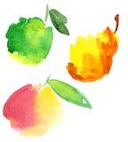 fruites水彩 免版税图库摄影