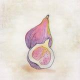 Fruitillustratie met waterverf Royalty-vrije Stock Fotografie