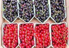 Fruitmanden met rode bessen en zwarte bessen Royalty-vrije Stock Foto's