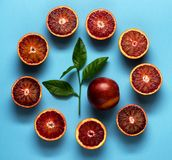 Сitrus fruits on a blue background. Royalty Free Stock Images