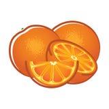 fruits померанцовые ломтики Иллюстрация вектора