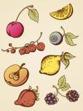 fruits сбор винограда Стоковые Изображения RF