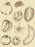 fruits сбор винограда Стоковые Фотографии RF
