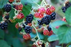 fruits сочно Стоковые Изображения RF