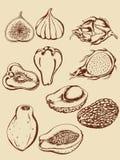 fruits тропический сбор винограда Стоковое Изображение