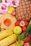 fruits тропическо стоковые фото