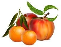 Fruits. Photorealistic  illustration of fruits Stock Photo