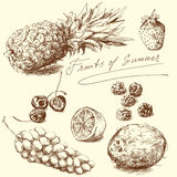 Fruits. Summer set - hand drawn fruits collection Royalty Free Stock Photos