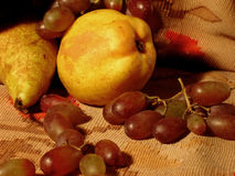 Fruits. Pear,quince & vine Royalty Free Stock Images