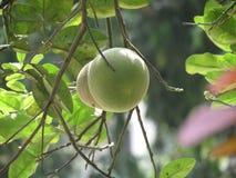 Fruits Photos libres de droits