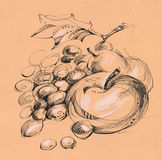 Fruits. Apple, pear and plums still life, hand drawing picture Stock Photography
