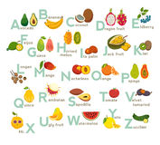 Fruits abc vector set. Exotic tropical fruits, vegetable alphabet. Litchi, Mango, rambutan, dragon fruit. Royalty Free Stock Photo