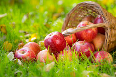 Fruits And Flowers In Autumn Stock Photography
