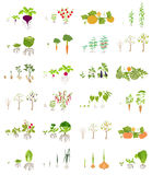 Fruits And Vegetables. Nutrition. Icon Set Stock Photography