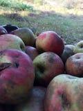 fruits, apples, homemade apples, autumn, not sprinkled fruit stock photo