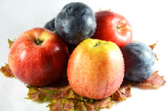 Fruits. Apples and plums on maple leaves, image crystallized. nice autumn picture stock photography