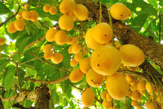 Fruits in Asia Royalty Free Stock Photos
