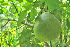 Fruits in Asia Stock Photography