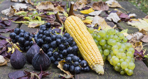 Fruits of autumn. Figs, grapes and corn: fruits of autumn Royalty Free Stock Images