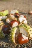 Fruits of autumn Stock Photo