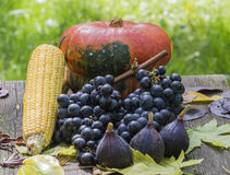 Fruits of autumn. Pumpkin, figs, grapes, corn and leaves Stock Photography