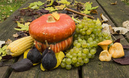 The Fruits of Autumn. Fruits of autumn, pumpkin, figs, grapes, corn, mushrooms and leaves Royalty Free Stock Image