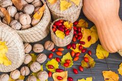 Fruits of autumn stock photography