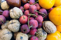 Fruits. The background of many fruits Royalty Free Stock Photos