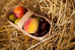 Fruits in the basket Stock Photography