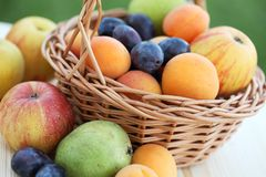 Fruits in basket Stock Image