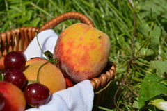 Fruits in a basket on the green grass. In the meadow Stock Photo