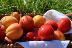 Fruits in a basket on the green grass. In the meadow Stock Images